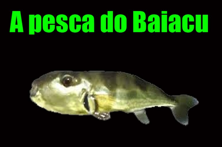 A pesca do Baiacu