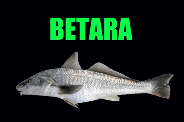 "Betara ou "" Papa Terra """