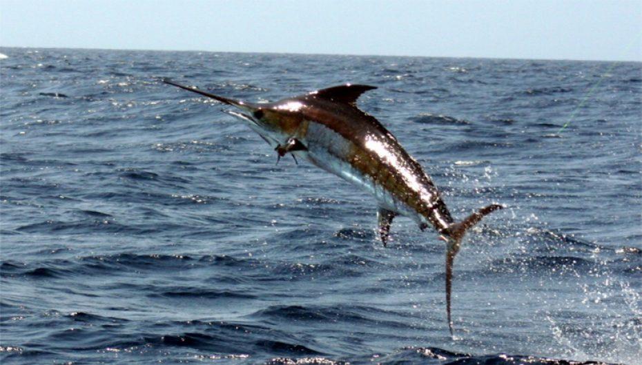 Peixes de Praia