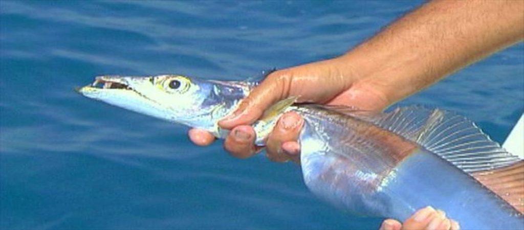 slider-espada-1024x450 Pesca do peixe espada