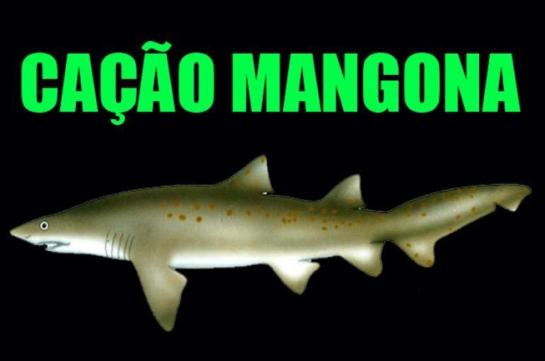 Cação Mangona