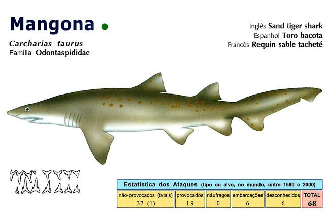 foto-mangona Cação Mangona