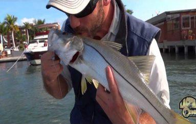 Pesca Robalo com camarão artificial