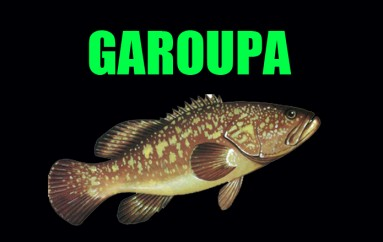 Garoupa