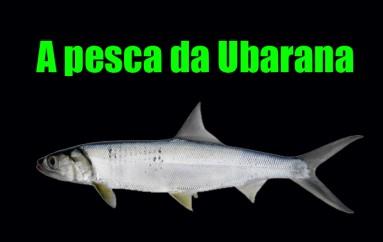 A pesca da Ubarana