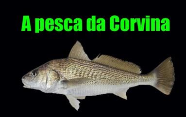 Pesca da Corvina