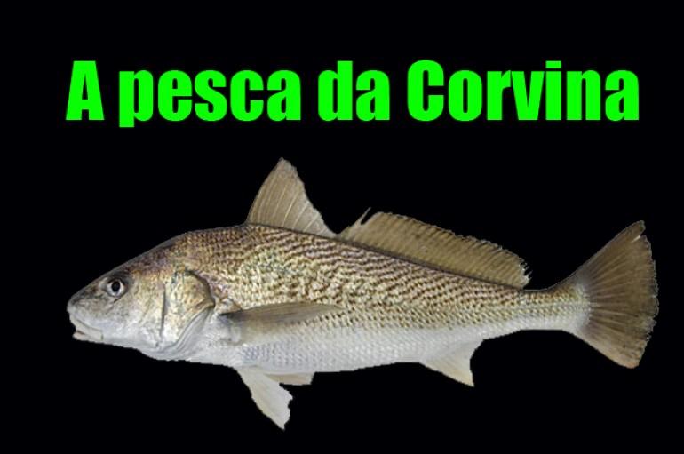 Kit para pesca de Corvina