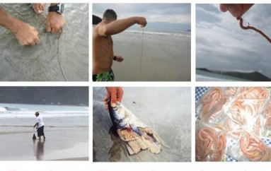 Captura da minhoca de praia