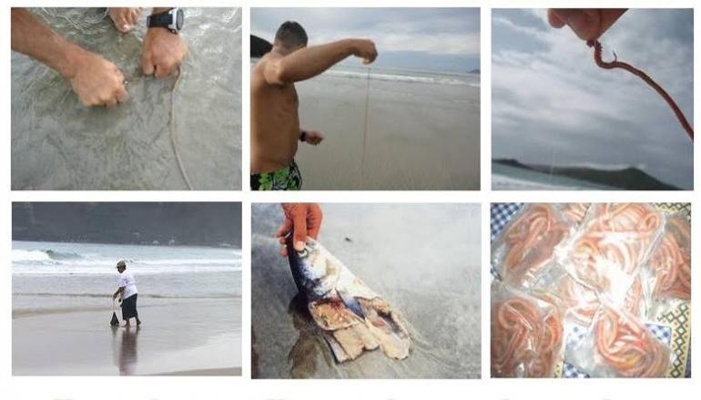 folder-minhoca Captura da minhoca de praia
