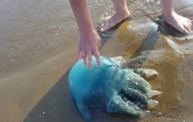 Cuidados redobrados na praia