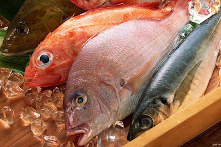Os cuidados com peixes e frutos do mar