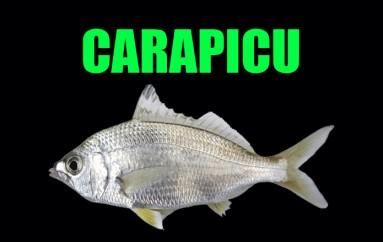 Pesca de Carapicu