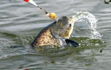 Pesca da Carpa