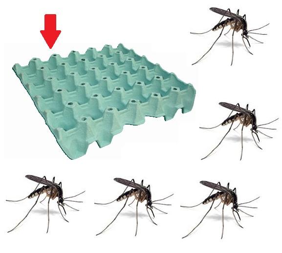 caixa-ovo Dica para afastar mosquitos