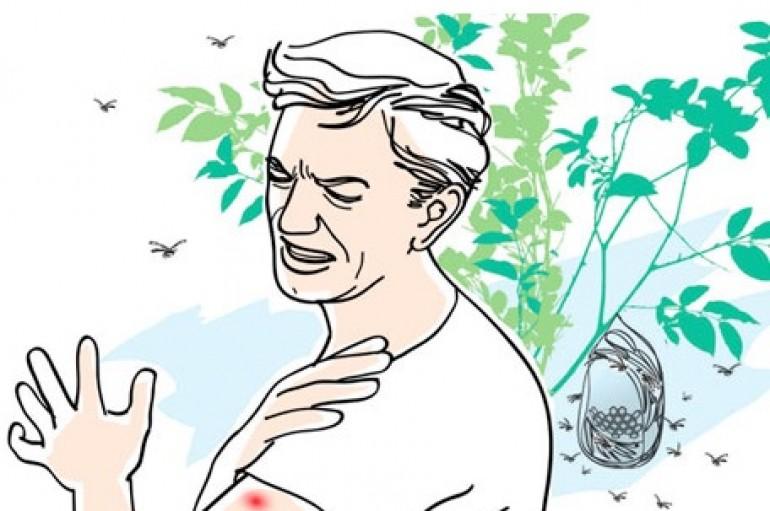 Dica para afastar mosquitos