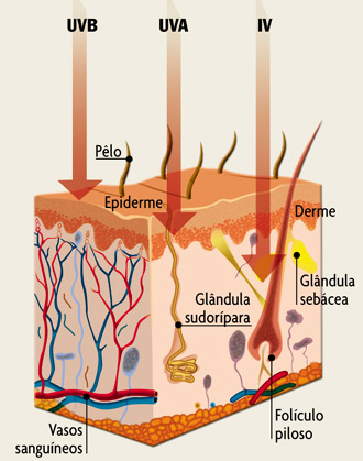 pele-1 Riscos da exposição ao Sol