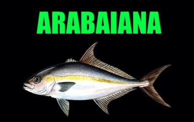 Arabaiana
