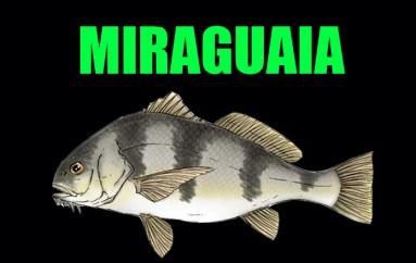 Miraguaia