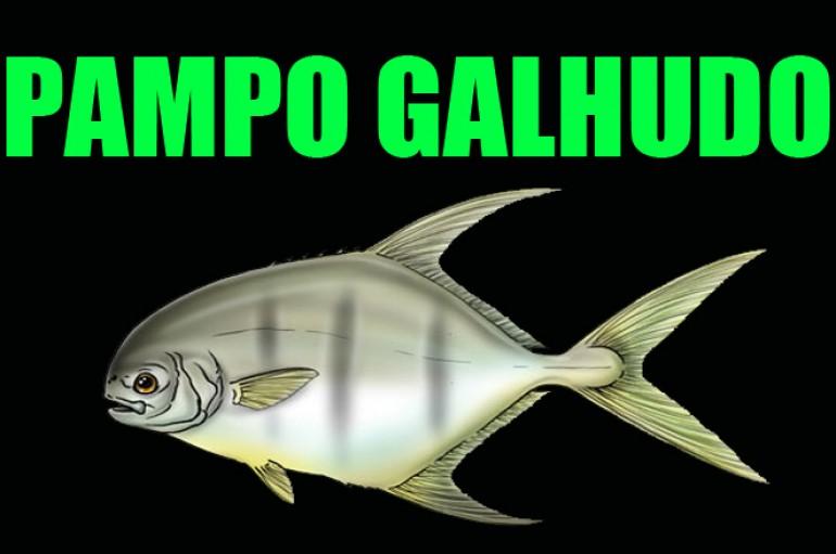 Pampo Galhudo