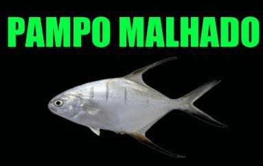 Pampo Malhado