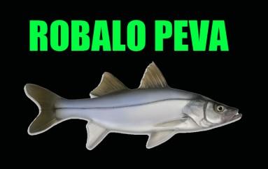 Robalo Peva