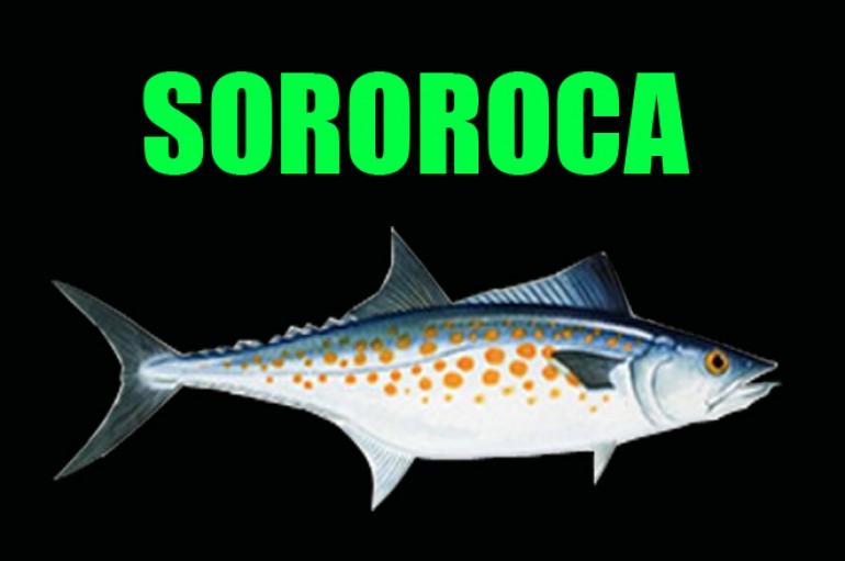 Sororoca
