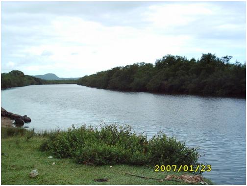humaita Onde pescar a Tainha