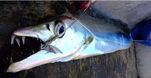 espada-1 Pesca do peixe espada
